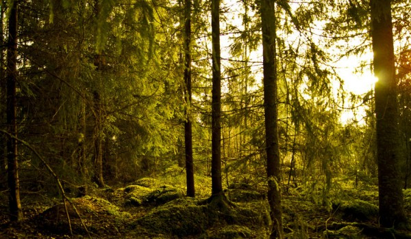 happy_forest_by_shantasphotos-d4ggeqm