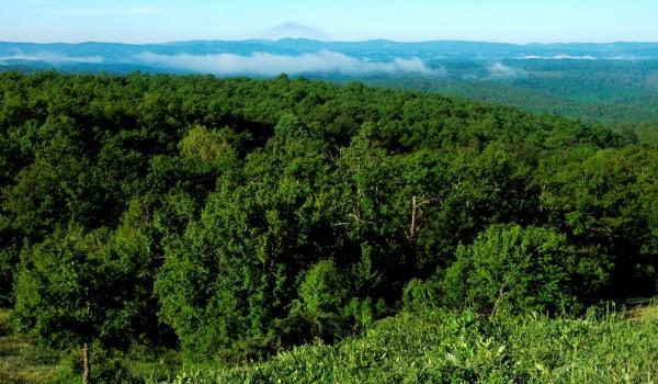 Биосферен резерват Узунбуджак Снимка: © Петко Цветков / БФБ