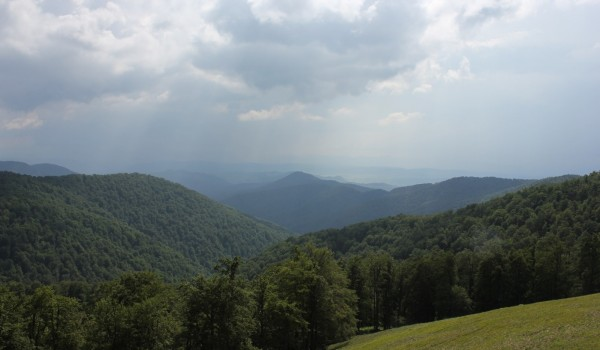 Figure 1 - Wide stretches of primary forest, as in Uholka National Park (Ukraine) are incredibly rare in Europe. (Photo F.M.Sabatini)